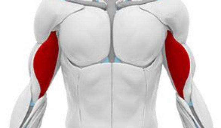 Contracture du biceps - infos