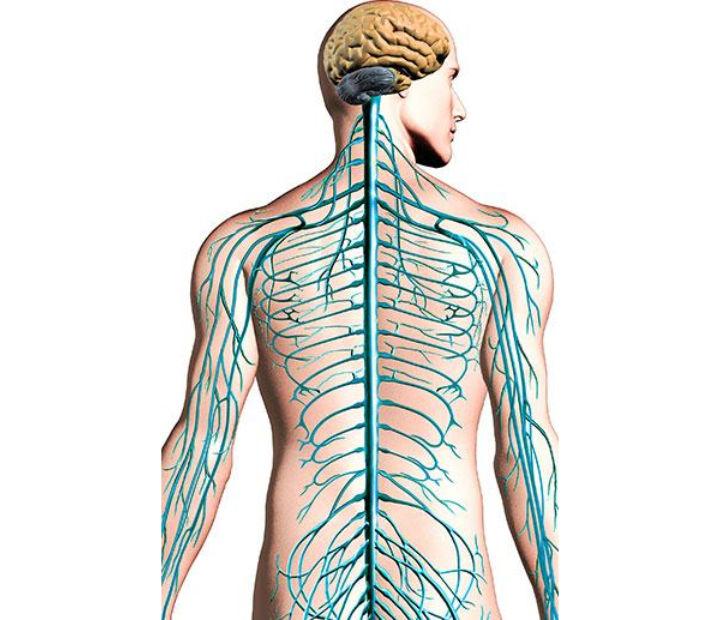 Sclérose en plaques - infos